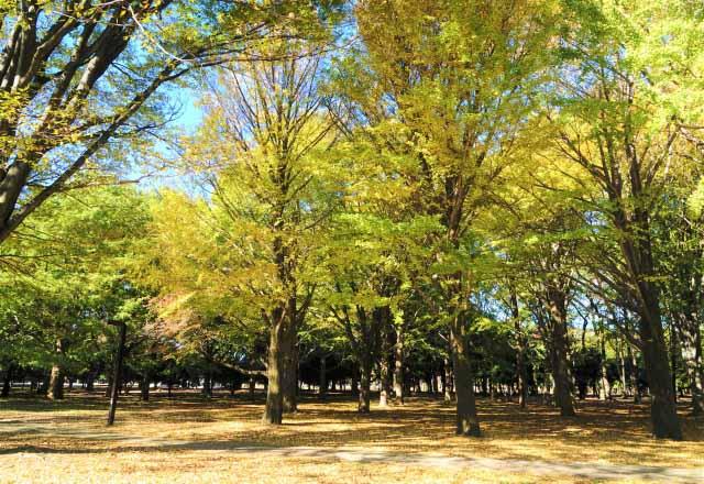 「代代木公園」