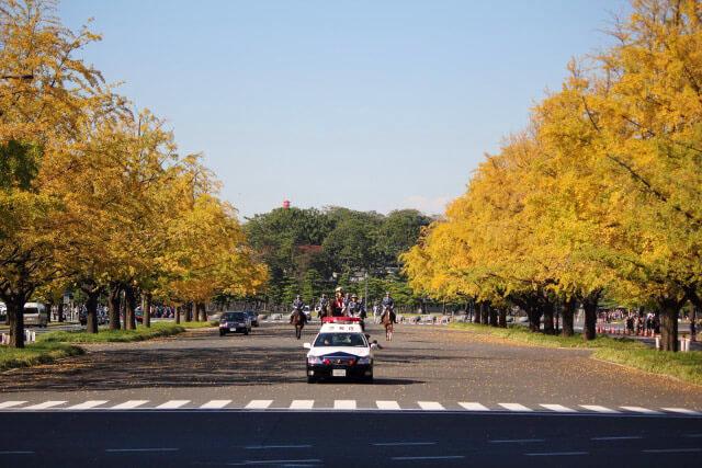 「行幸大道」上的皇室儀裝馬車與銀杏並木景致