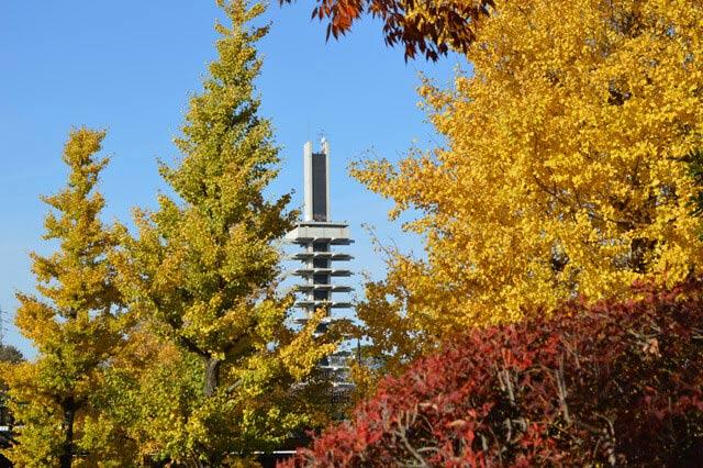 「駒澤奧林匹克公園」層次相疊的紅葉景致