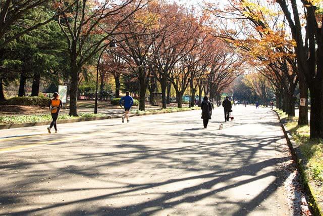「駒澤奧林匹克公園」的林間慢跑