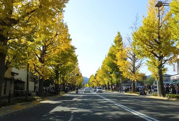 甲州街道的銀杏並木