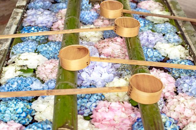 Floating hydrangeas on chozuya, purifying fountain