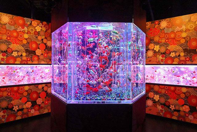【日本橋】「藝術燈光金魚展」歷年最大展場&金魚主題咖啡廳