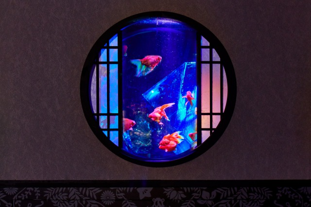 「圓窗魚缸」
