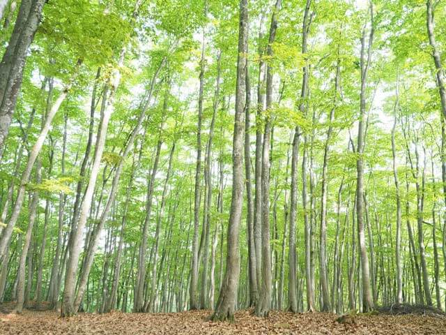 Bijinbayashi (Beauty Forest)