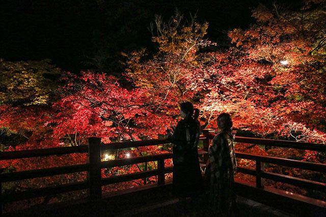 야히코 공원의 단풍계곡