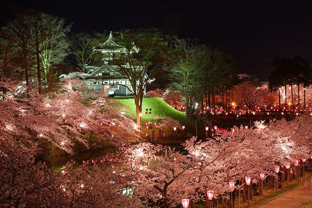 高田公園的櫻花