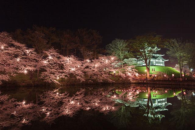 高田城址公園的櫻花