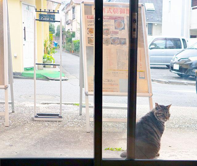 坐在店門口的貓咪