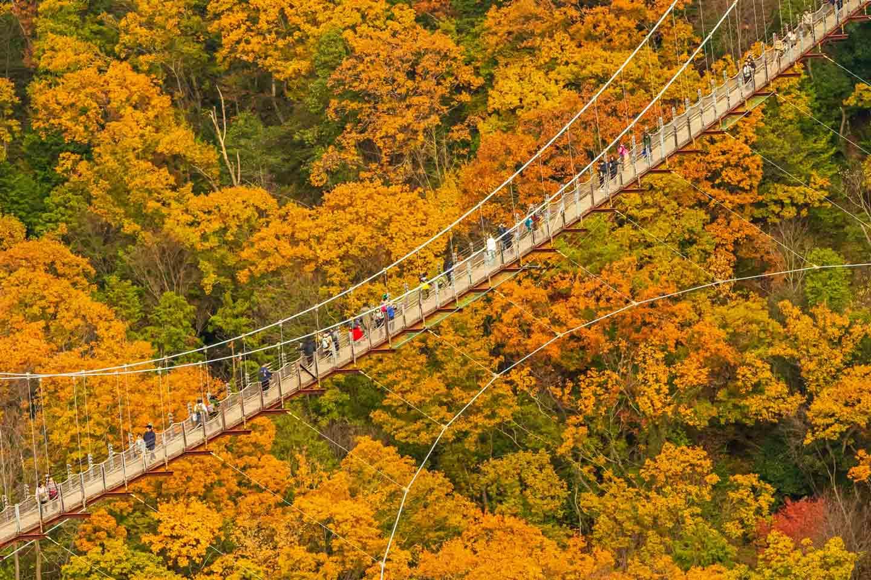 5 Best Fall Foliage in Osaka
