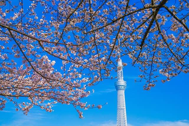 【東京】從這裡拍出最美的東京晴空塔!推薦攝影東京晴塔地點8選