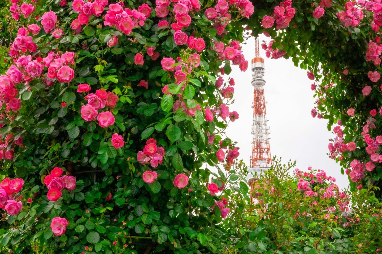 【東京】拍攝東京鐵塔的最佳地點在這裡!推薦攝影景點6處