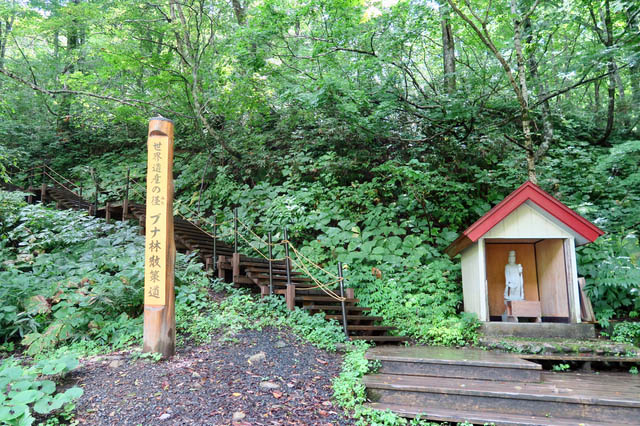 Trailhead of beech forests