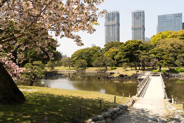 【東京】在「浜離宮恩賜庭園」來趟散步賞櫻花之旅吧!