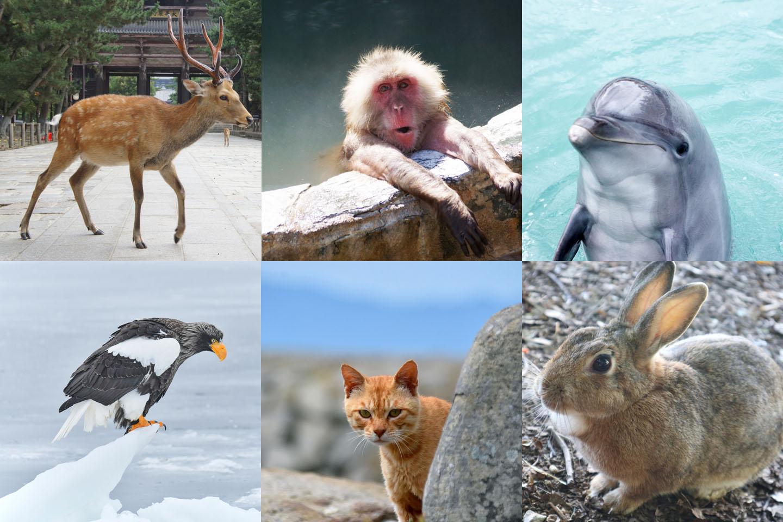 想在日本觀賞可愛的「野生動物」嗎?推薦地點全部一次公開!