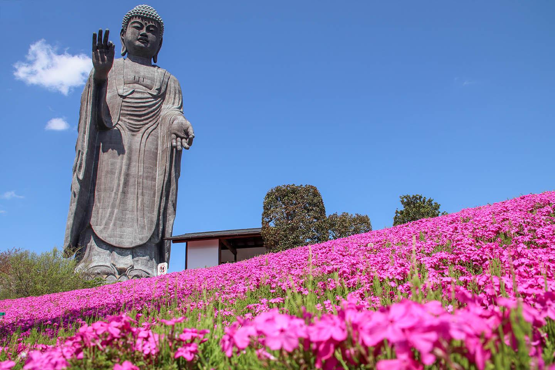 World's Tallest Standing Bronze Statue: Ushiku Daibutsu (Buddha)
