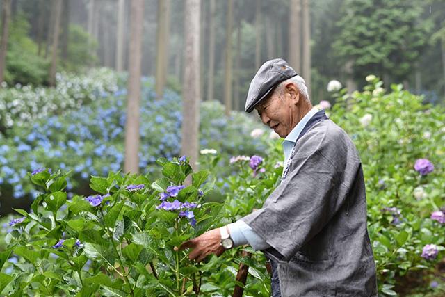 Chuichi Minamisawa, the owner and the legendary man who made Minamisawa Hydrangea Mountain