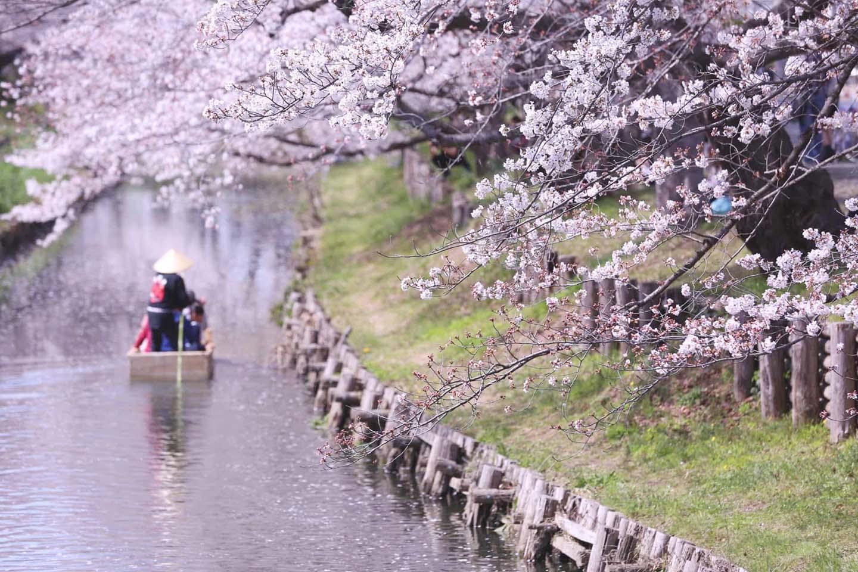 기차 타고 배 타고, 더 특별한 벚꽃 구경 팁 공개!