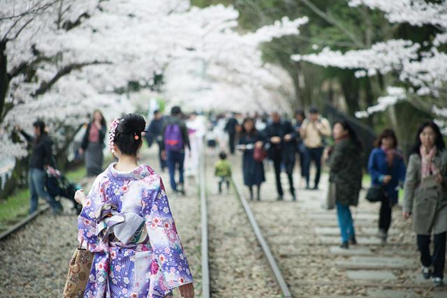 嶄新【賞櫻】方式!搭乘電車、屋形船、划船、人力車、自行車……前往櫻花聖地!