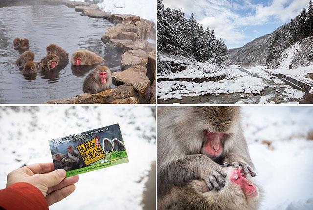 【長野】如何前往「地獄谷野猿公苑」?一起來看猴子泡溫泉的可愛模樣