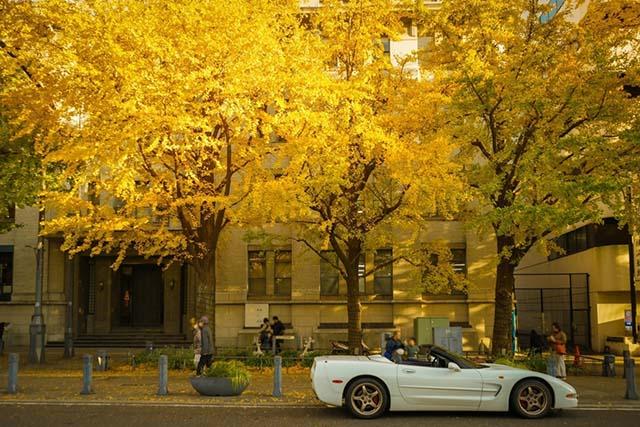 【関東】日帰りOK!秋の絶景広がる「紅葉ドライブコース8選」